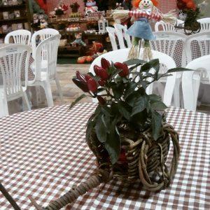 toalhas mesa plastico 205 300x300 - Toalhas Mesa Plástica